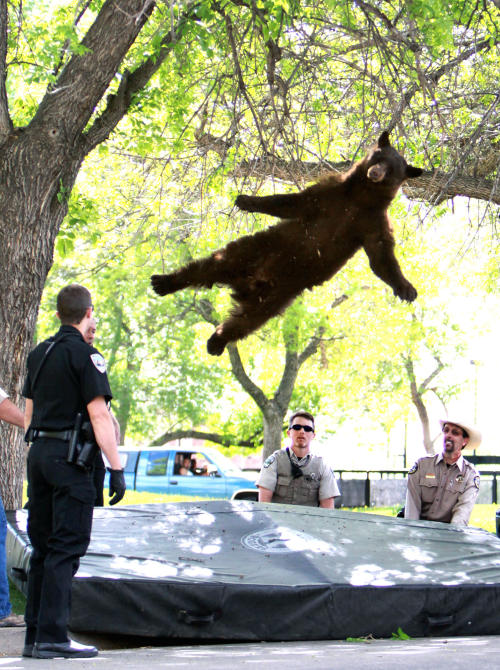 best bear pic of the week